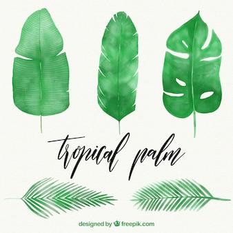 水彩の椰子の葉