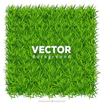 Реалистичный фон зеленой травы