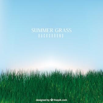 Реалистичный фон травы