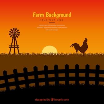 雄鶏のシルエットの夕暮れの背景