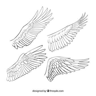 手描きの翼のセット