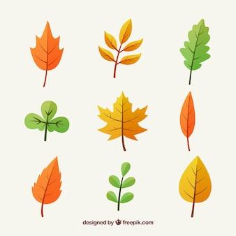 Коллекция разноцветных осенних листьев