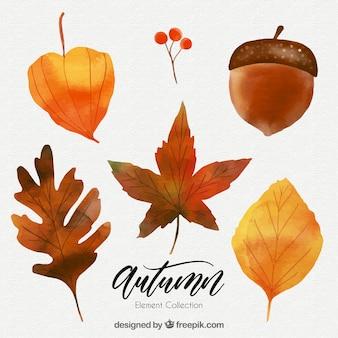 乾燥した水彩葉のパック