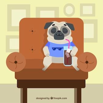 Счастливый мопс, лежащий на диване