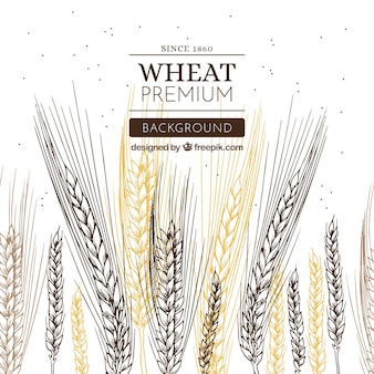 手描きの小麦の背景