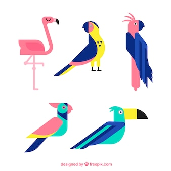 フラットなエキゾチックな鳥のコレクション