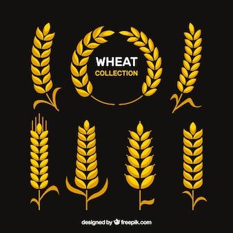 Сбор плоской пшеницы