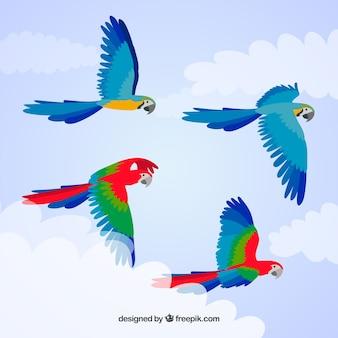 カラフルな鳥の背景