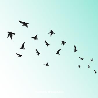 シルエット飛行鳥の背景