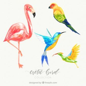 水彩画エキゾチックな鳥のコレクション