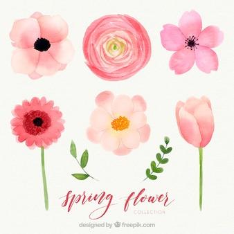 水彩春の花のコレクション