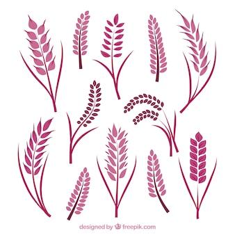 平らな小麦のコレクション