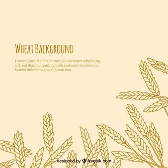 手描きのスタイルで小麦の背景