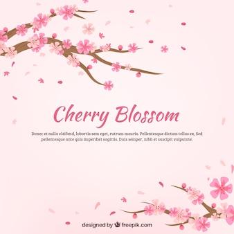 Красивый фон из цветущей вишни