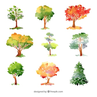 Коллекция деревьев в акварельном стиле