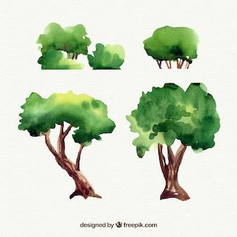 Коллекция акварельных деревьев