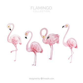 水彩風のさまざまな姿勢を持つフラミンゴコレクション