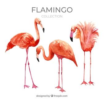 水彩様式の異なる姿勢を持つフラミンゴコレクション