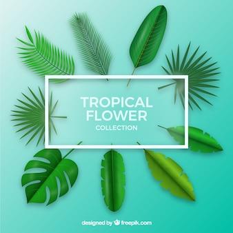 Коллекция тропических цветов в реалистичном стиле