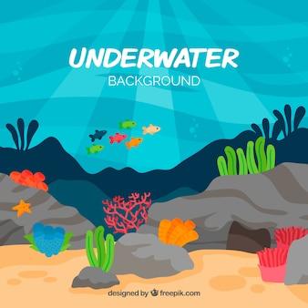 水生動物の似顔絵を持つ水中の背景