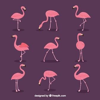 Набор розовых фламинго с различными позами