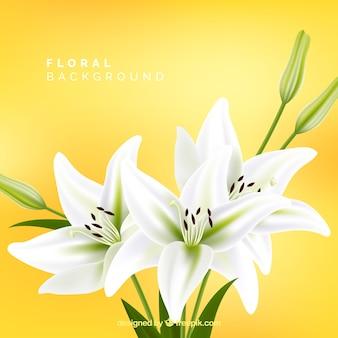 Цветочный фон с белыми лилиями