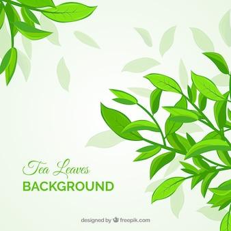 茶は植物と背景を葉