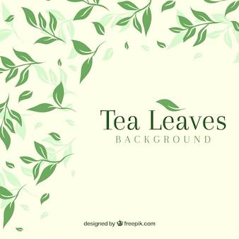 Фон из чайных листьев с плоским дизайном