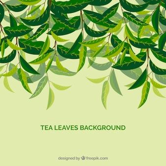 手描きのスタイルで茶葉の背景