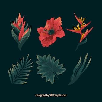 カラフルな熱帯の花の手描きのセット