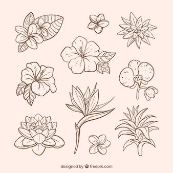 Прекрасная коллекция тропических цветов