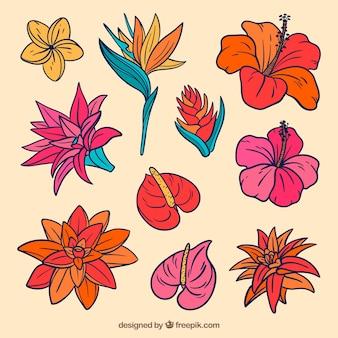 素敵な手描きの熱帯の花のコレクション