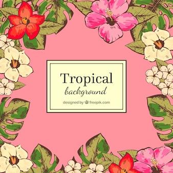 カラフルなトロピカル葉