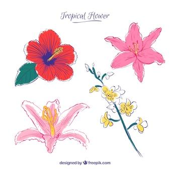 ラブリーな手描きの熱帯の花のコレクション