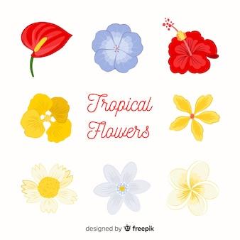 様々な熱帯の花のコレクション