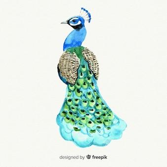 水彩画の美しい孔雀