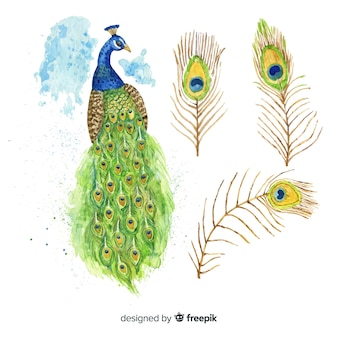 水彩スタイルの素敵な孔雀