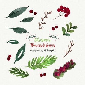 美しい水彩クリスマスの花と葉のコレクション