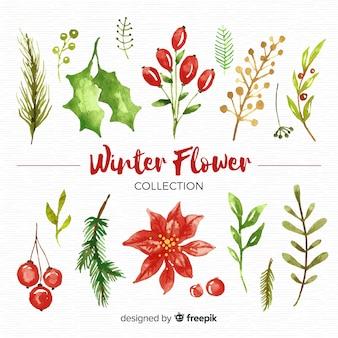 Коллекция зимних цветов