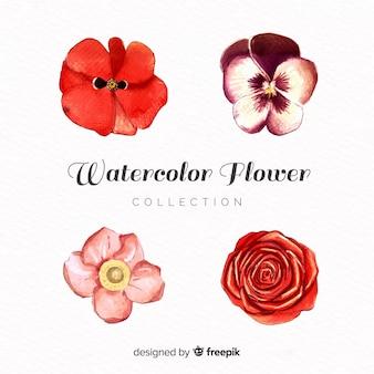 水彩画の花のコレクション