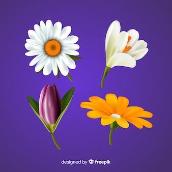 カラフルな春の花セット