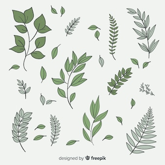 Коллекция старинных ботанических листьев