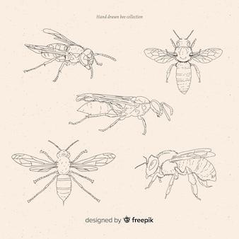 手描きの昆虫スケッチコレクション
