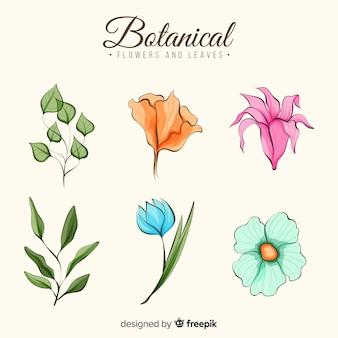 水彩画の植物の花のコレクション