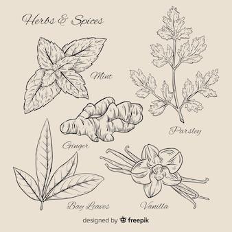リアルな手描きの植物性スパイスとハーブ
