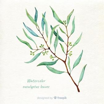 手描きのユーカリの枝の背景