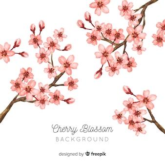 桜の花の背景
