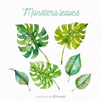 水彩モンステラの葉コレクション
