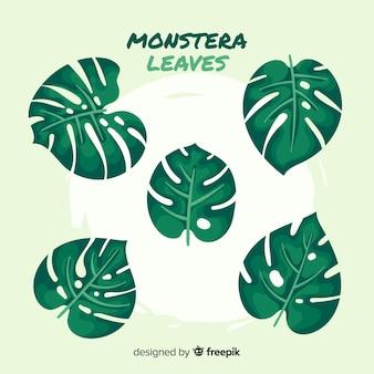 平らなモンステラの葉