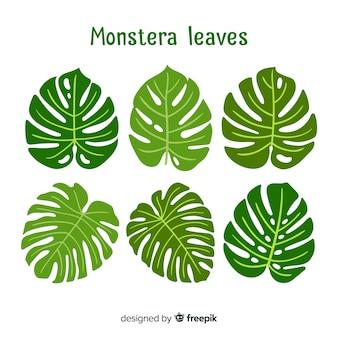 手描きのモンステラの葉
